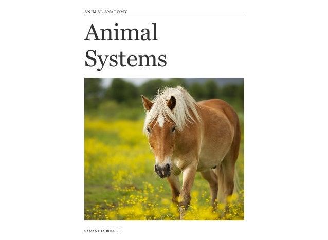 Animal Skeletal System