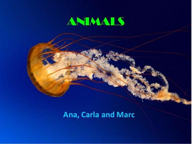 ANIMALS  Ana, Carla and Marc
