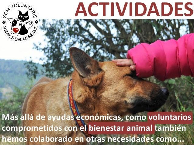 ACTIVIDADES Más allá de ayudas económicas, como voluntarios comprometidos con el bienestar animal también hemos colaborado...