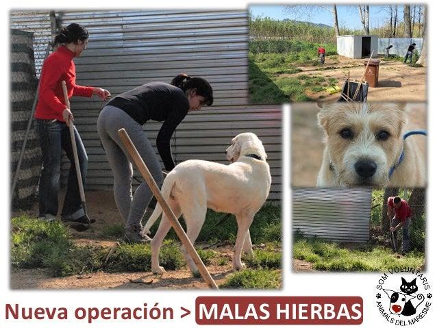 Nueva operación > MALAS HIERBAS