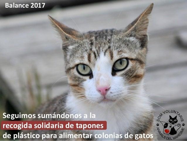 Seguimos sumándonos a la recogida solidaria de tapones de plástico para alimentar colonias de gatos Balance 2017