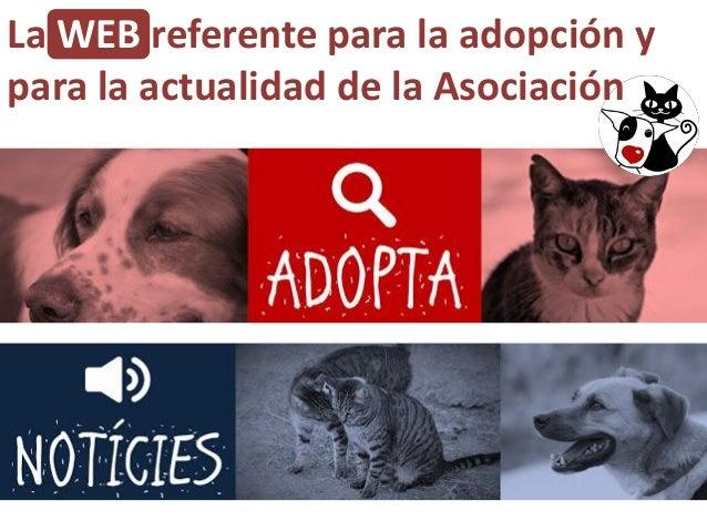 La WEB referente para la adopción y para la actualidad de la Asociación
