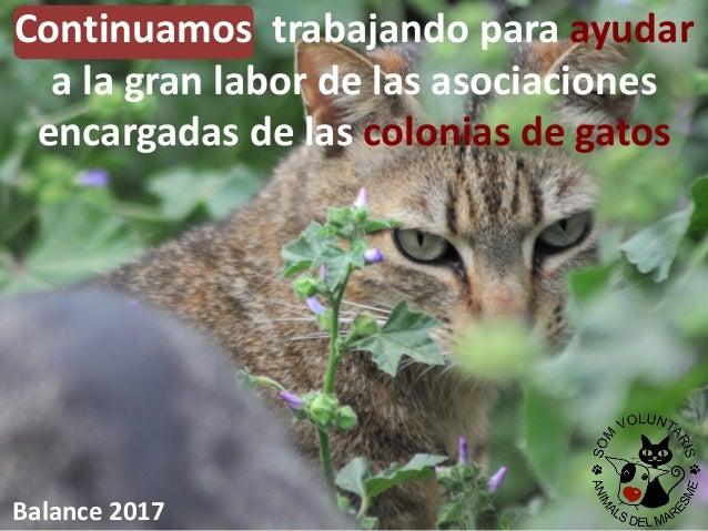 Continuamos trabajando para ayudar a la gran labor de las asociaciones encargadas de las colonias de gatos Balance 2017