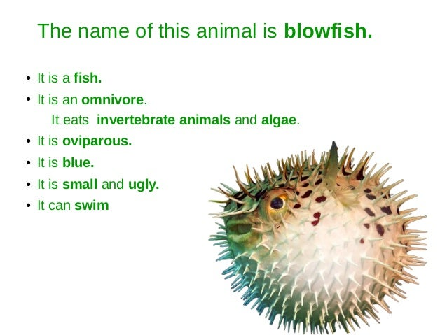 The name of this animal is blowfish. ● It is a fish. ● It is an omnivore. It eats invertebrate animals and algae. ● It is ...