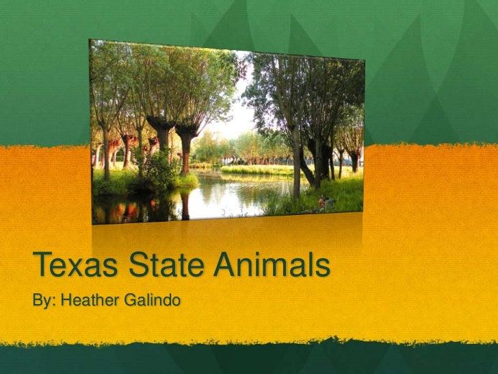 Texas State Animals<br />By: Heather Galindo<br />