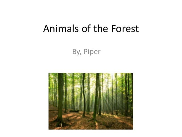 Animals of the Forest      By, Piper