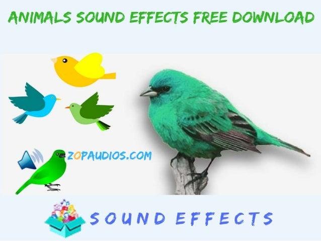Bird & Animals Sounds Free Download