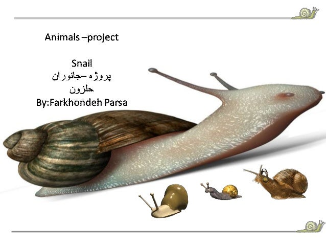 "Animals wproject  Snail CJL. ).5:'A+"""" 03.3.):   0335-'  By: Farkhondeh Parsa i  ,  ' ,  _  Z7 4-—-- T -  _.  L {J 1,2,;  ..."