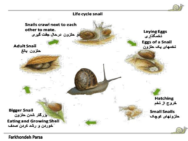 Animals Project Snail