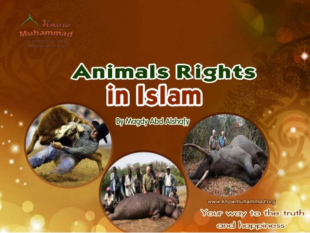 Prophet Muhammad, inspired by God'srevelation, laid the human rights and evenanimals rights long before both termscame int...