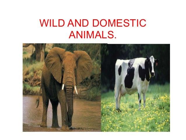 WILD AND DOMESTIC ANIMALS.