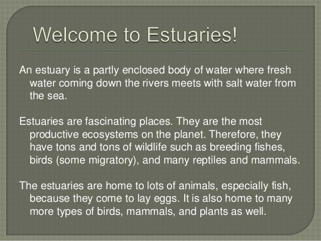 Animals That Live In Estuaries