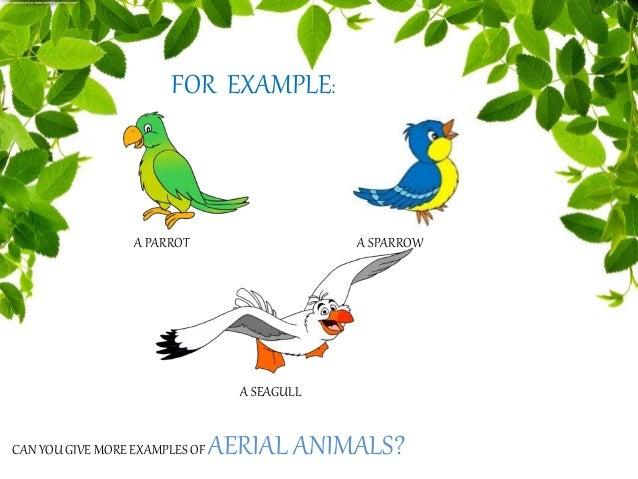 Animals Their Habitat