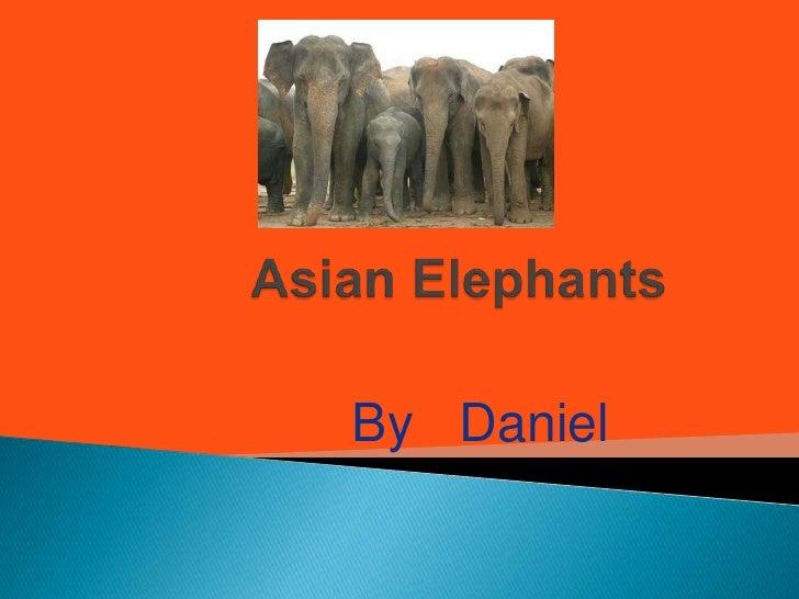 Asian Elephants<br />By   Daniel<br />