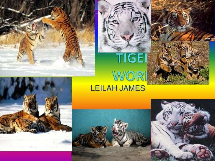 MY TIGER WORK<br />LEILAH JAMES<br />