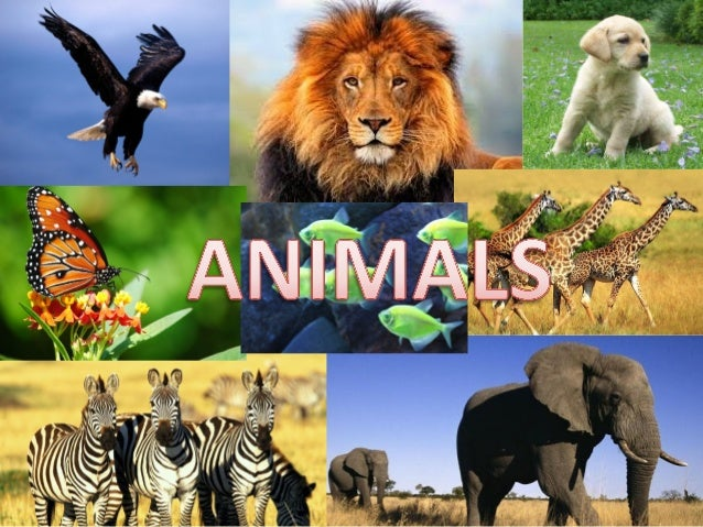 There are domestic and wild animals