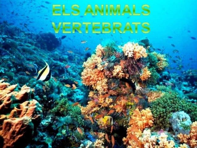 Són  els animals que tenen columna vertebral, és a dir, una estructura articulada d'ossos que serveixen per protegir la m...