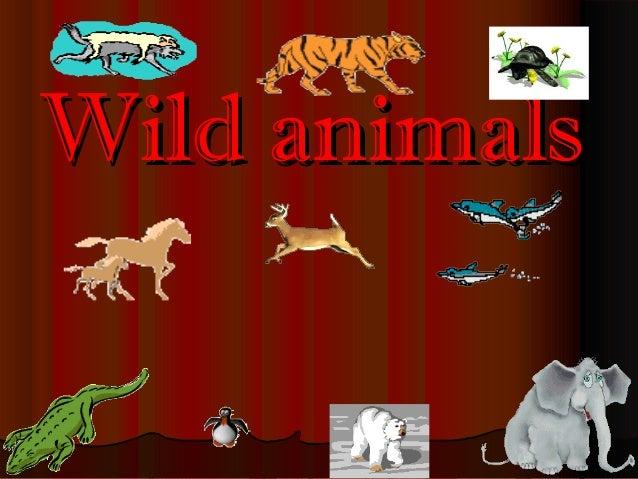 Wild animalsWild animals