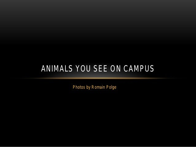 ANIMALS YOU SEE ON CAMPUS      Photos by Romain Polge