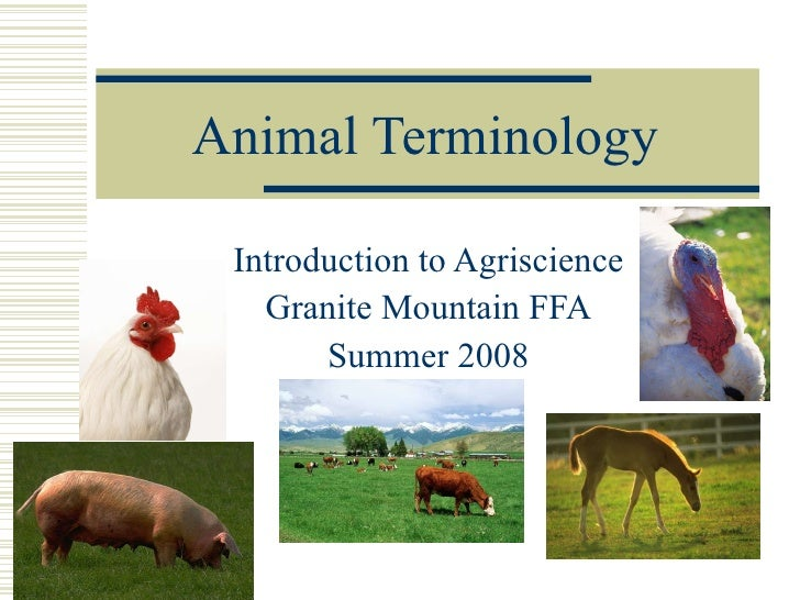 Animal Terminology Introduction to Agriscience Granite Mountain FFA Summer 2008