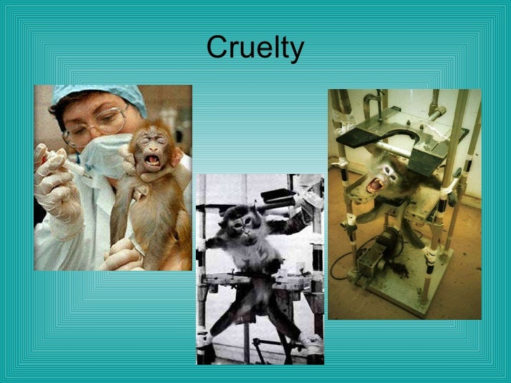 animal experimentation 1 Does animal testing help human medicine 33 facts to be considered (1) less than 2% of human illnesses (116%) are ever seen in animals.