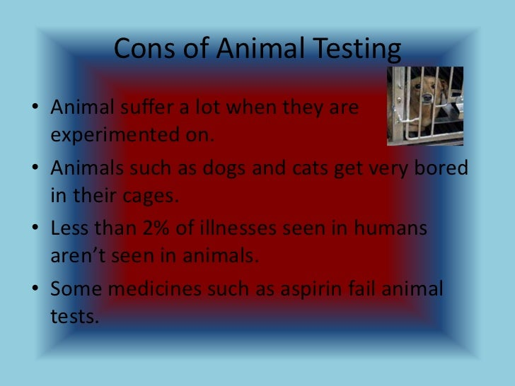 essay on animal testing pros