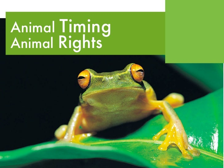 Animal Timing Animal Rights