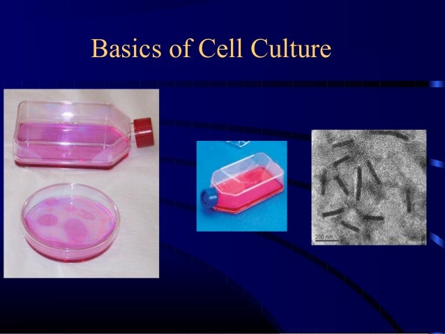 animal cell culture In this work (part i), surface modified styrene polymers as new microcarrier  material for animal cell culture were extensively investigated.