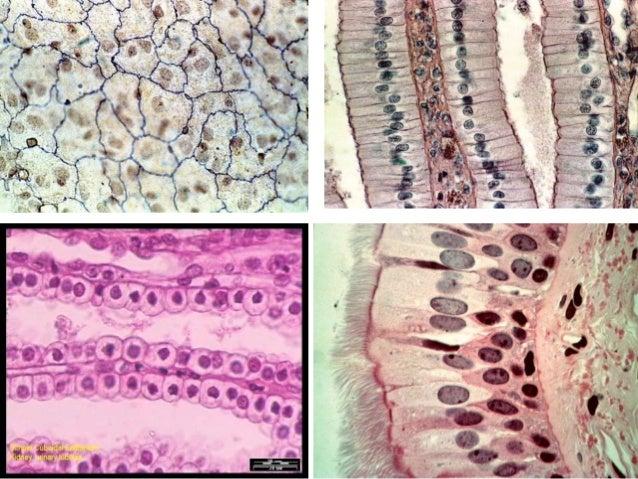 animal tissues 9 cbse