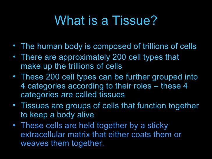 animal tissues and homeostasis, Cephalic Vein