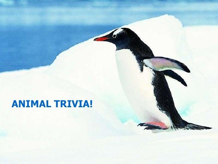 ANIMAL TRIVIA!<br />