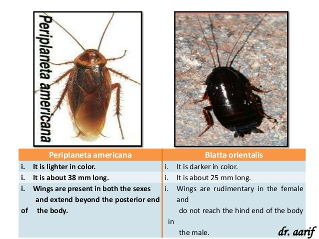 Anatomy difference between male and female