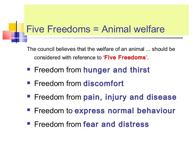 animal welfare essay topics