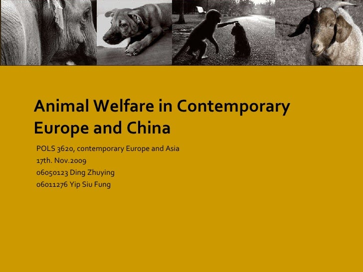 Animal  Welfare  in Contemporary Europe and China POLS 3620, contemporary Europe and Asia 17th. Nov.2009 06050123 Ding Zhu...