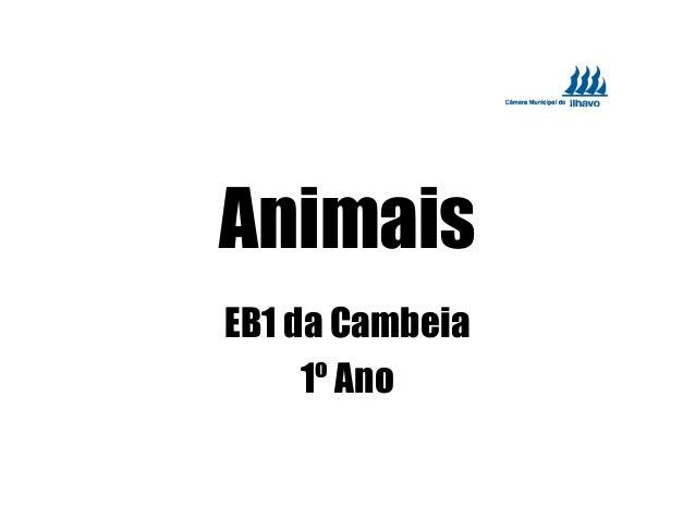Animais EB1 da Cambeia 1º Ano
