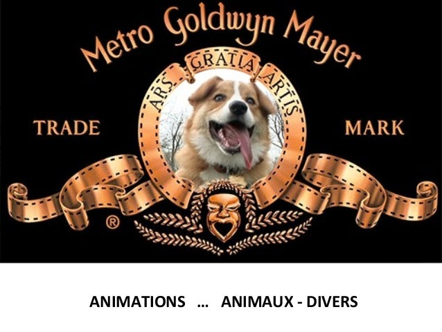 ANIMATIONS … ANIMAUX - DIVERS
