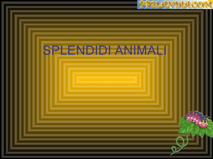 SPLENDIDI ANIMALI