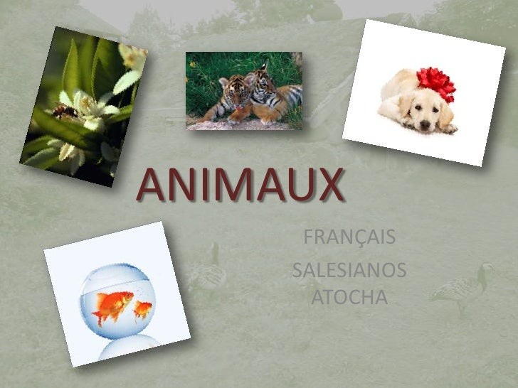 ANIMAUX<br />FRANÇAIS<br />SALESIANOS ATOCHA<br />