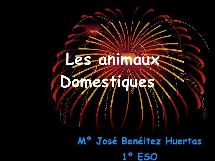 Les animaux  Domestiques Mº José Benéitez Huertas 1º ESO