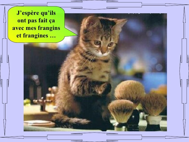 Animaux droles