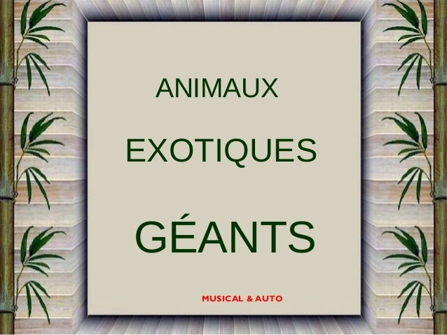 ANIMAUX  EXOTIQUES  GÉANTS MUSICAL & AUTO