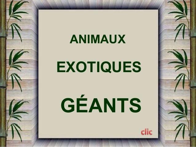 ANIMAUX  EXOTIQUES  GÉANTS