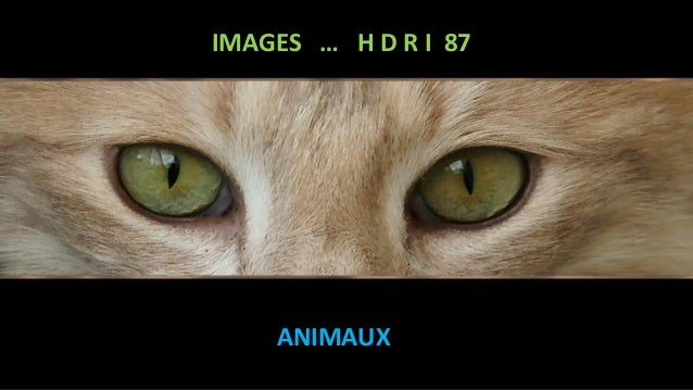 IMAGES … H D R I 87 ANIMAUX