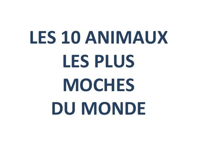 LES 10 ANIMAUXLES PLUSMOCHESDU MONDE