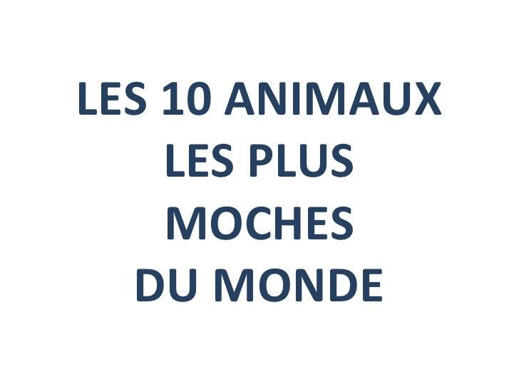 LES 10 ANIMAUX LES PLUS MOCHES DU MONDE