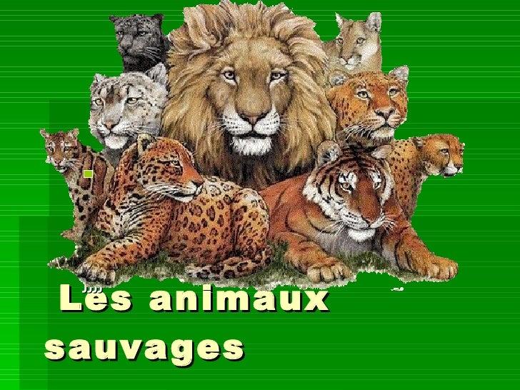 Les animaux sauvages  jjjj