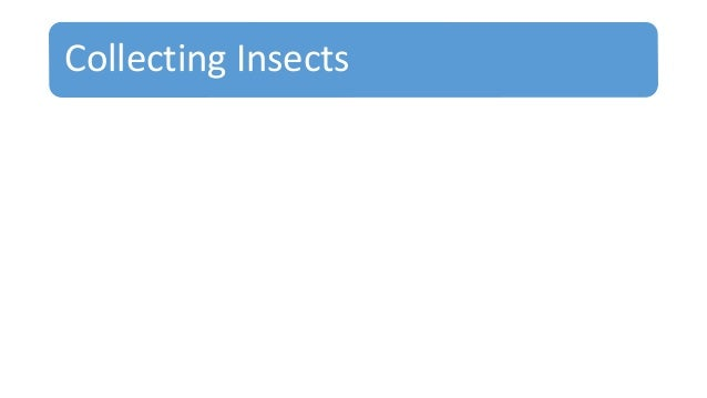 Collecting Insects