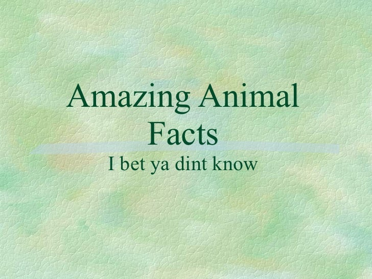 Amazing Animal Facts I bet ya dint know