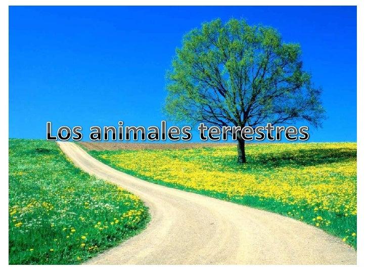 Los animales terrestres<br />Los animales terrestres<br />