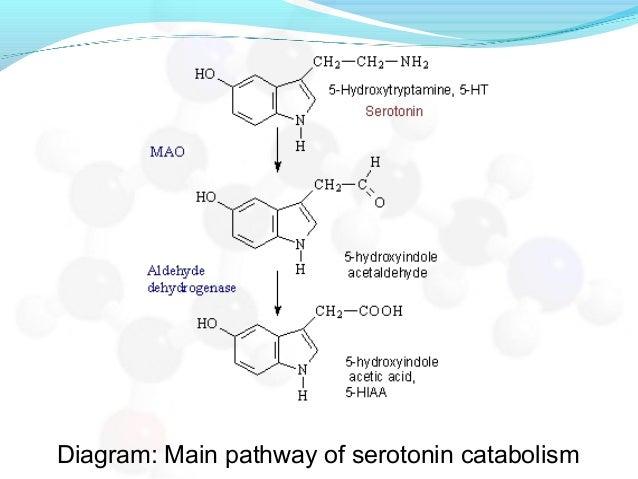 Diagram: Main pathway of serotonin catabolism